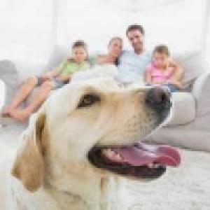 Animais em condomínios: Quais tipos podemos ter?